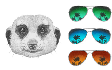 mongoose: Portrait of Mongoose with sunglasses. Hand drawn illustration.