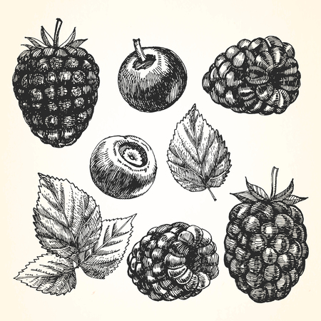 Hand-drawn set of Berries. Vector 矢量图像