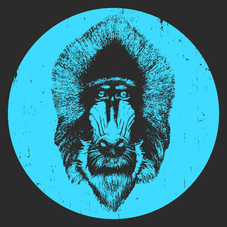 Portrait of  Mandrill. Hand-drawn illustration. T-shirt design. Vector Illustration