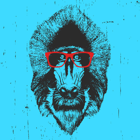 mandrill: Portrait of  Mandrill with glasses. Hand-drawn illustration. T-shirt design. Vector