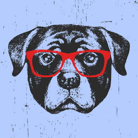 Portrait of Rottweiler with glasses. Hand drawn illustration. Vector