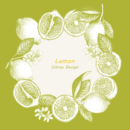 tree line: Hand drawn illustration with citrus fruits. Vector lemon. Illustration