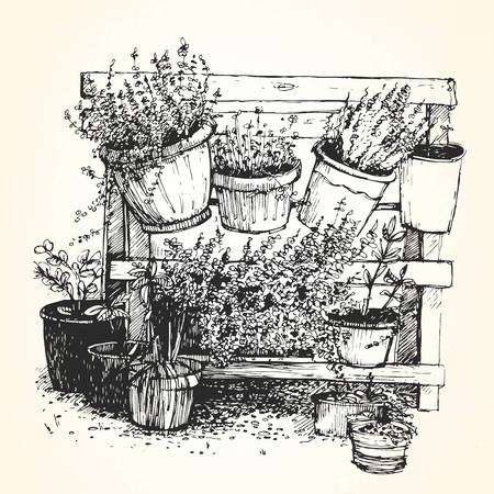 houseplants: Hand drawn illustration of houseplants. Vector