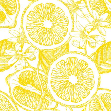 Seamless pattern with citrus fruits. Vector lemon. Hand drawn illustration.