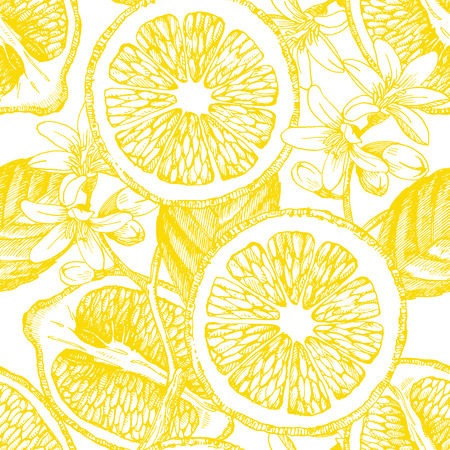 Seamless aux agrumes. citron Vector. Hand drawn illustration.