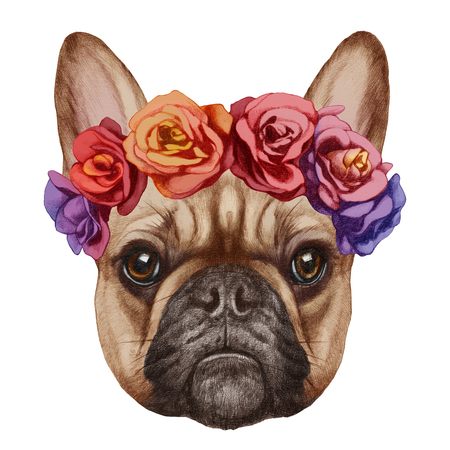 dog rose: Portrait of French Bulldog with floral head wreath. Hand-drawn illustration, digitally colored.