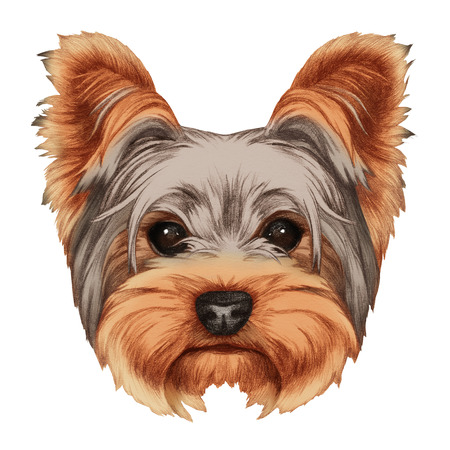 Portrait of Yorkshire Terrier Dog. Hand-drawn illustration, digitally colored. Stock Photo