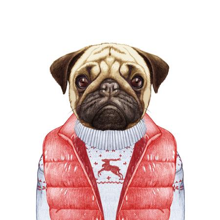 人間として動物。ベストとセーターのパグ犬。手描きイラスト、デジタル色します。