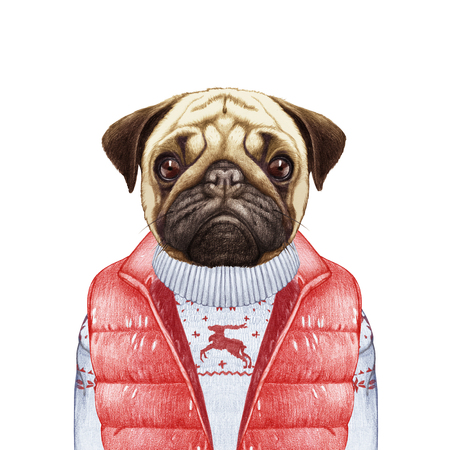 Animals as a human. Pug Dog in down vest and sweater. Hand-drawn illustration, digitally colored. Banco de Imagens