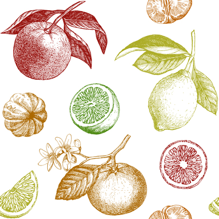 mandarins: Seamless pattern with lemons, oranges and mandarins. Hand drawn illustration.