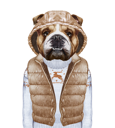 vest in isolated: Animals as a human. English Bulldog in down vest and sweater. Hand-drawn illustration, digitally colored.