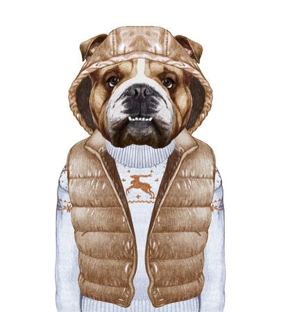 perros vestidos: Los animales como humanos. Bulldog Inglés en el chaleco hacia abajo y suéter. Ejemplo a mano, coloreado digitalmente. Foto de archivo