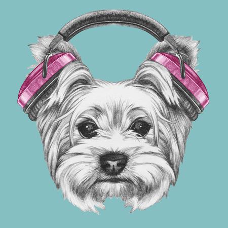 ヘッドフォンでヨークシャー ・ テリア犬の肖像画。手描きのイラスト。
