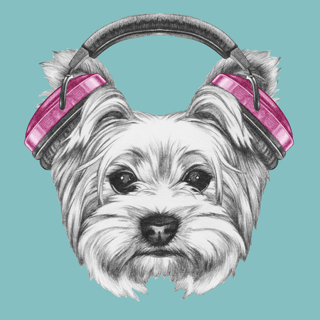 Portrait of Yorkshire Terrier Dog with headphones. Hand drawn illustration.