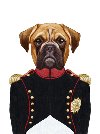 Portrait of Boxer Dog  in military uniform.  Hand-drawn illustration, digitally colored.