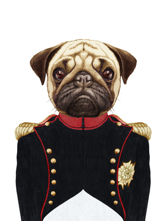 razas de personas: Portrait of Pug Dog in military uniform.  Hand-drawn illustration, digitally colored.