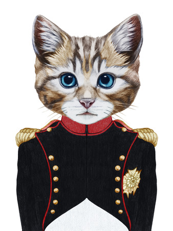 Portrait of Cat in military uniform.  Hand-drawn illustration, digitally colored. Stock Photo