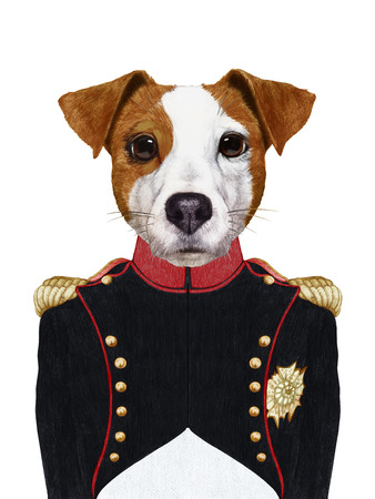 Portrait of jack Russell in military uniform. Hand-drawn illustration, digitally colored.