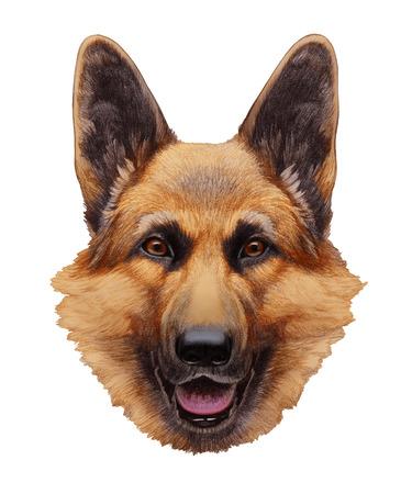 Portrait of German Shepherd. Hand-drawn illustration, digitally colored.