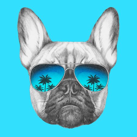 Portrait of French Bulldog with mirror sunglasses. Hand drawn illustration.