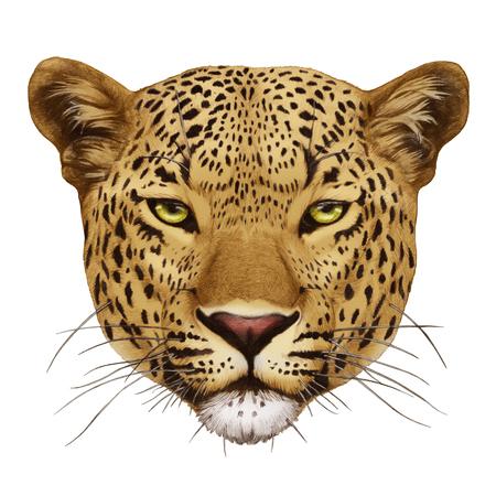 Portrait of Leopard. Hand-drawn illustration, digitally colored.