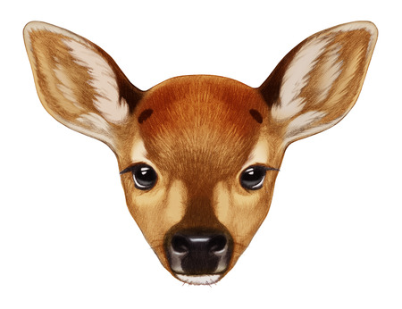 Portrait of Fawn. Hand-drawn illustration, digitally colored. Stock Photo