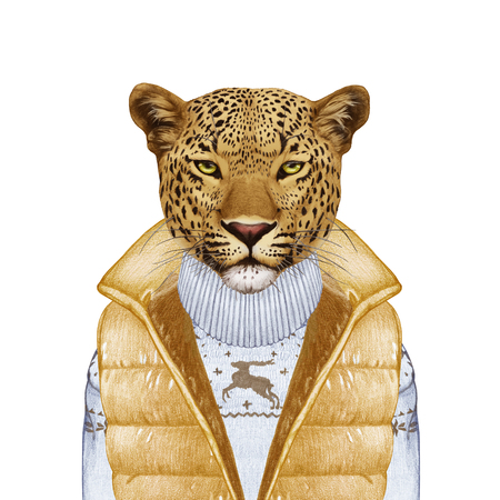 vest in isolated: Animals as a human. Portrait of Leopard in down vest and sweater. Hand-drawn illustration, digitally colored.