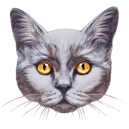 Portrait of British Shorthair Cat. Hand-drawn illustration, digitally colored. Banco de Imagens