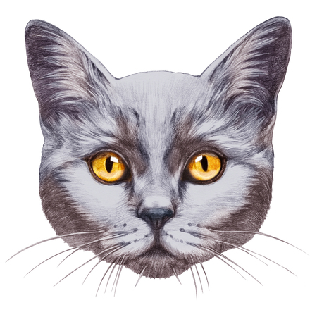 Portrait of British Shorthair Cat. Hand-drawn illustration, digitally colored. Stock Photo