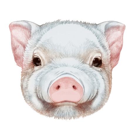 Portrait of Piggy. Hand drawn illustration. Stock Photo