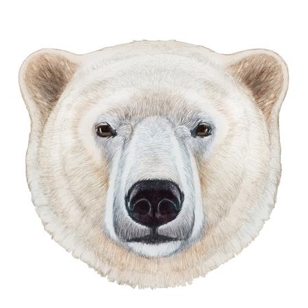 Portrait of Polar Bear. Hand-drawn illustration, digitally colored.