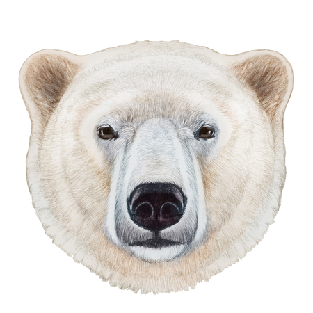 Portrait of Polar Bear. Hand-drawn illustration, digitally colored.