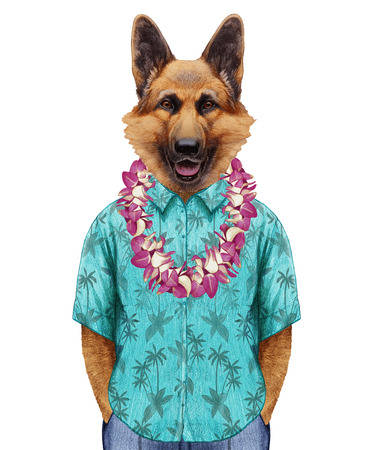 Portrait of German Shepherd in summer shirt with Hawaiian Lei  . Hand-drawn illustration, digitally colored.