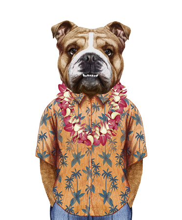 Portrait of  English Bulldog in summer shirt with Hawaiian Lei. Hand-drawn illustration, digitally colored.
