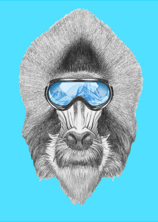 Portrait of Mandrill with ski goggles. Hand drawn illustration. Stock Photo