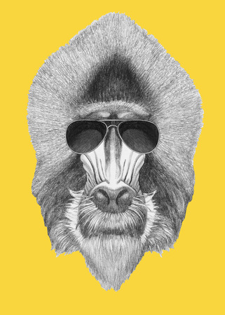 Portrait of Mandrill with sunglasses. Hand drawn illustration.