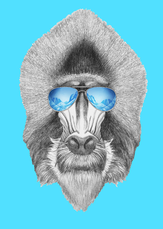 Portrait of Mandrill with mirror sunglasses. Hand drawn illustration. Stock Photo