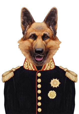 shepard: Portrait of German Shepherd in military uniform. Hand-drawn illustration, digitally colored.
