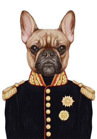 Portrait of French Bulldog in military uniform. Hand-drawn illustration, digitally colored.