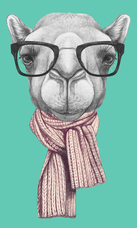 Portrait of Camel with glasses and scarf. Hand drawn illustration.