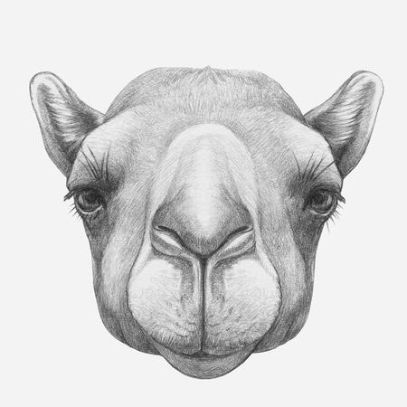 ラクダの肖像画。手描きのイラスト。 写真素材