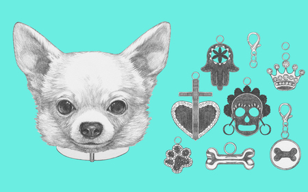 Portrait of  Chihuahua with dog-collar and collection of pendants. Hand drawn illustration.