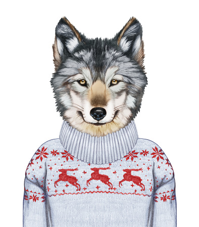 Animals as a human. Portrait of Wolf in sweater. Hand-drawn illustration, digitally colored. Stock Photo