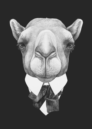 Portrait of Camel in suit. Hand drawn illustration.