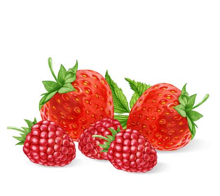 ラズベリーとイチゴの手描きイラスト。デジタル色。