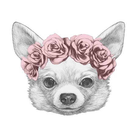 Portrait of Chihuahua with floral head wreath. Hand drawn illustration.