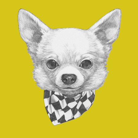 Portrait of Chihuahua with scarf. Hand drawn illustration. Stock Photo