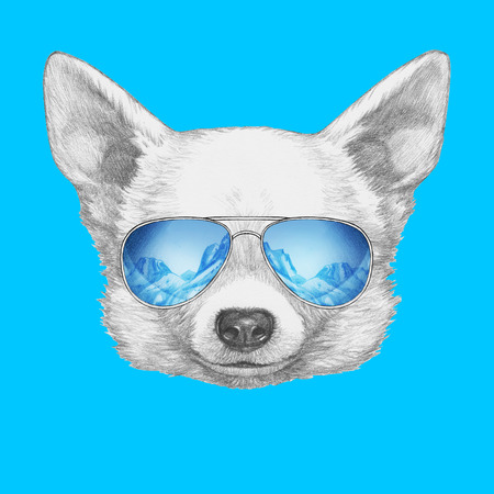 ski wear: Portrait of Chihuahua with mirror sunglasses. Hand drawn illustration.