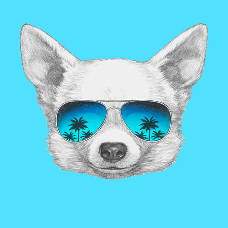 Portrait of Chihuahua with mirror sunglasses. Hand drawn illustration.