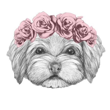 Portrait of Havanese with floral head wreath. Hand drawn illustration of dog.
